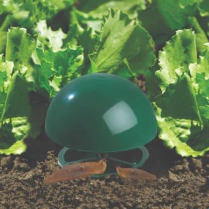 Etree slug trap in row of lettuces