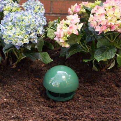 Etree snail trap in flower bed