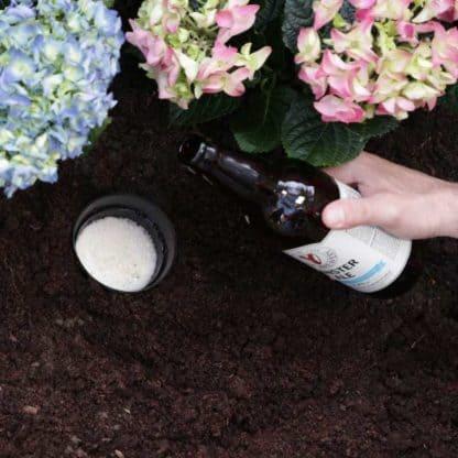 Filling Slug Trap with Beer